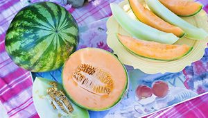 difference melon pasteque